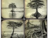 The Roots Series - Set - Black and White - Nature Photography - Trees - Original Fine Art Photography