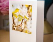 Greeting Cards - Johnny Apple Seed Set by Sara Norris Photography