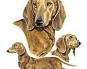 DACHSHUND RED SMOOTH  MultiDog Large Picture on One Fat Quarter Fabric Panel - for Quilting and Sewing