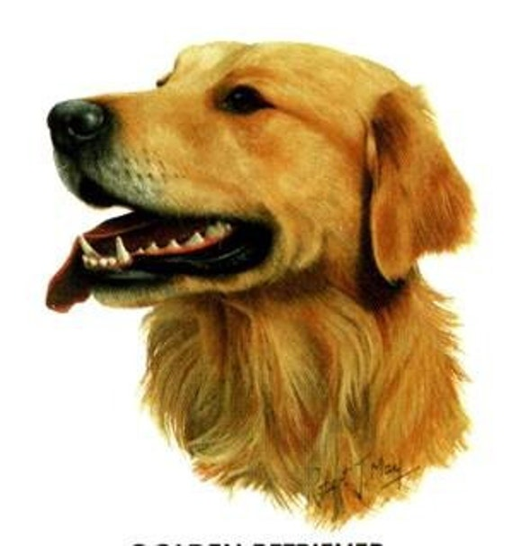GOLDEN RETRIEVER Dog Head on TWELVE Identical 6 inch Fabric Squares for Quilting and Sewing