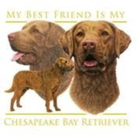 """CHESAPEAKE BAY RETRIEVER Dog on One 18 x 22 inch Fabric Squares for Sewing. Actual picture is approx 12"""" x 15"""" on white background."""