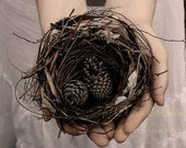 Woodland bird nest hands art photography - In Our Hands - pine cones, hands, soft pink sepia