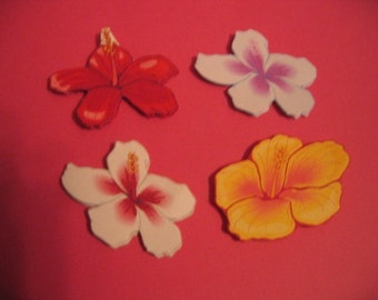 Hibiscus magnets