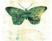 Butterfly Print 24x36 Large - Jackie - Butterflies and Moths Series