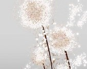Dandelion Art - Perennial Moment (silver) - 24x36 LARGE Print