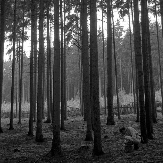 Bohemian Dream - traditional black and white photograph, 8x10 paper, forest photography, bohemia photography, czech republic photography