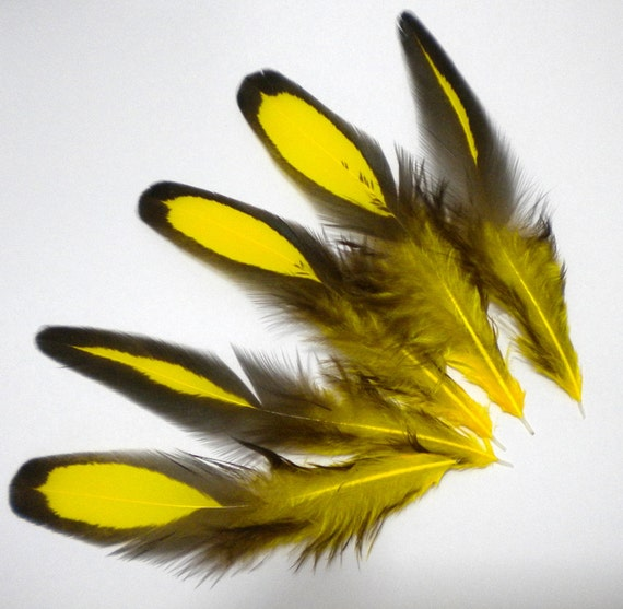 5 Yellow and Black Hen Feathers