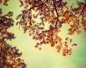 Autumn photography, fall art, golden leaves, verdigris art, mocha nougat orange teal fall teal sky fine art photo turquoise bathroom decor