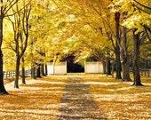 Autumn Photography, Yellow Fall leaves, Bucks County Farm, Rustic Decor, Pennsylvania Landscape, Nature Photography - The Romance Of Fall