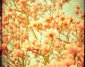 Magnolia Photography Flower Print Rustic Decor Flower Photography - As Seen On ABC TV's Modern Family - 11x14
