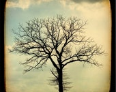 Tree photography nature print lone tree photo blue and brown tree silhouette sunset photograph - Fine Art Photography Print - 8x8