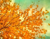 Autumn photography fall leaves orange tree persimmon decor mint sky naturalist Bucks County photo tango tangerine woodland photograph
