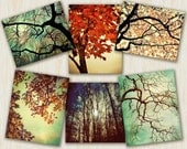 Tree Photography nature prints autumn color tree art nature art, Forest For The Trees - 6 art prints set  - You choose the size photographs