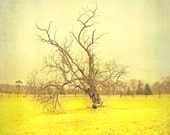 Tree Photography, home decor, yellow art, summer style, nature photograph, lone tree, large art, woodland print - 30x30