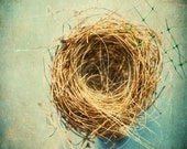 Bird Nest Photography, Empty Nest, Nature Photography, Rustic Decor, still life French country kitchen teal and brown twigs nature art