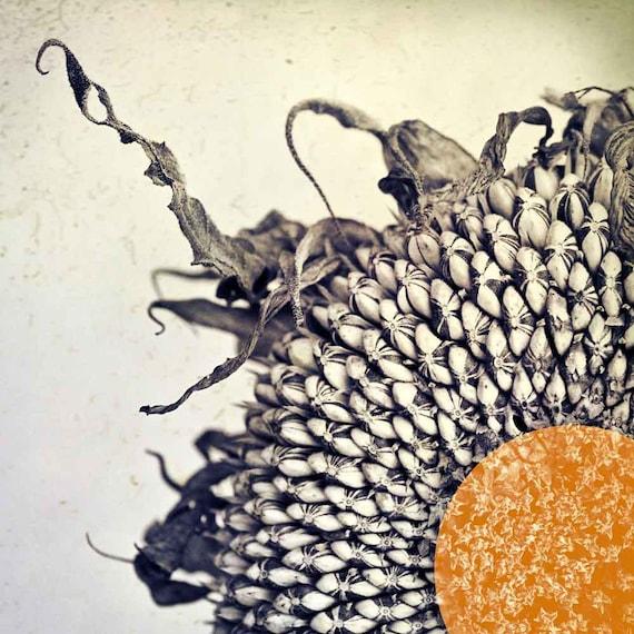 Sunflower Art, rustic, home decor, photography, modern home decor, black white photography, orange decor, tangerine art, modern wall art