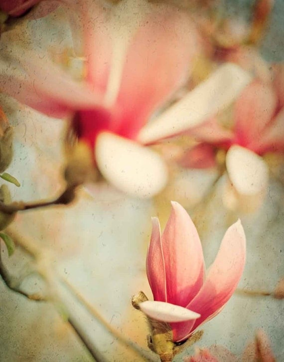 Pink Flower Photography Spring Decor Flower Photo Pink Magnolia Flowers Teal Sky Nature Photography Print 8x10 - Photograph