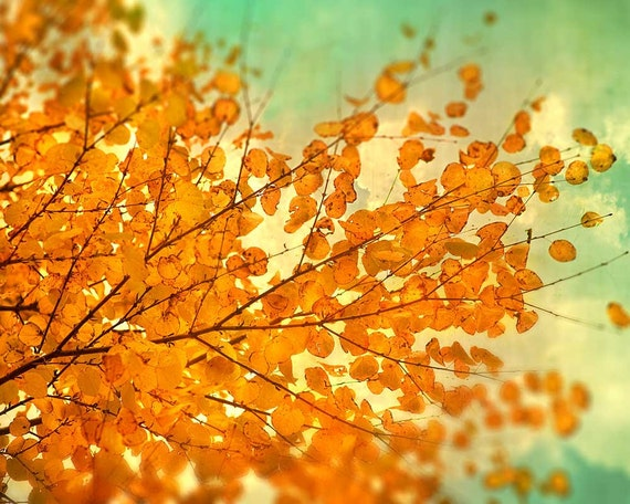 Rustic Fall photography, autumn color, tree art, woodland photograph, persimmon orange leaves mint sky naturalist photo tango tangerine