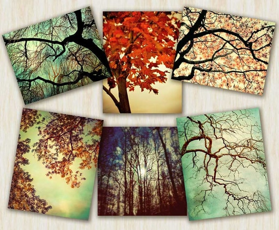Tree Photography nature prints autumn color tree art nature art, tree decor - 6 print set  - You choose the size photographs