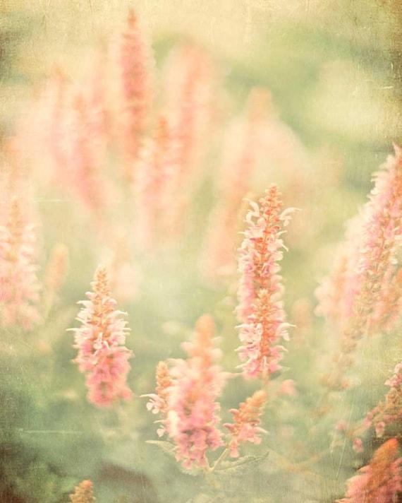 Flower Photography, Garden Photograph, Shabby Chic, Nature photo, pink bath decor, honeysuckle art, botanical print, home decor, floral art