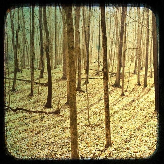 Into the Woods - Fine Art Photograph - 10x10
