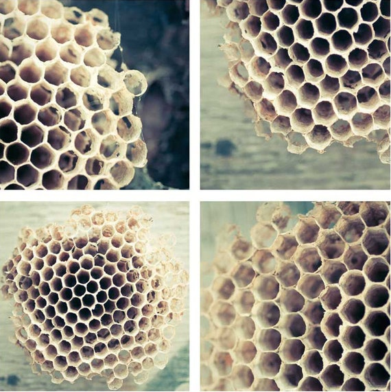Honey Comb Photography Bee Hive Wall Art Wall By