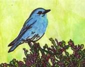 Bluebird ACEO