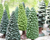 Miniature Conifer Forest (qty 4 trees) - perfect for your terrarium