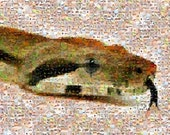 Boa constrictor snake mosaic montage art print