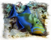 Queen Triggerfish 8x10 Artistic Watercolor