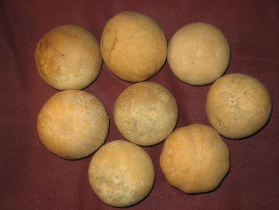 8 JUMBO ROUND, BALL SHAPED GOURDS(A6)