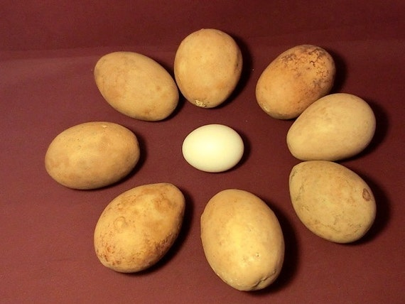 Dried, Cleaned, Craft Ready Egg Gourds, Great for Ornaments, Easter eggs (Item  19)