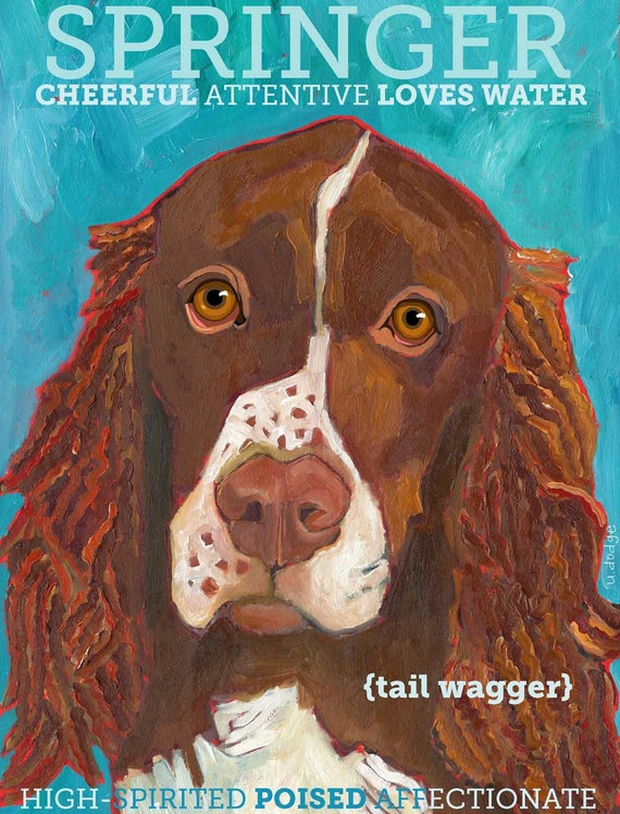 Springer Spaniel No. 1- magnets, coasters and art prints