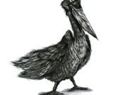 Pelican - Original Pencil Drawing