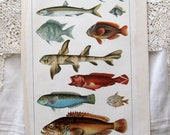 Vintage Fishes of the Philippines, Plate Engraving Print - 1902