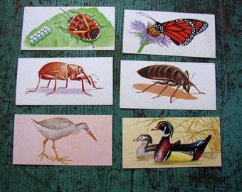 VINTAGE FLASH CARDS.BIRDS, BUGS, CREEPIES, CRAWLIES..WONDERFUL COLOR ILLUS, INFO TEXT