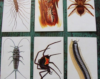 CREEPIE CRAWLIES . FLASH CARDS . C 1962 GREAT COLOR, TEXT. FUN AND EDUCATIONAL