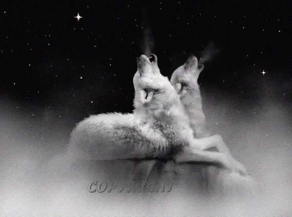 wolf art, wolf print, wolf painting, white wolf, wildlife art, wolves howling, wolf pack, stars, animal, two wolves, starlight, signed print