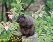 Original Nature Digital Photograph Black Squirrel Sitting with Pink Flowers Signed Fine Art
