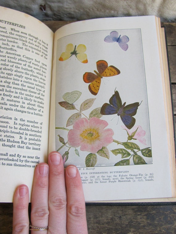 antique 1930s book // Butterflies Worth Knowing