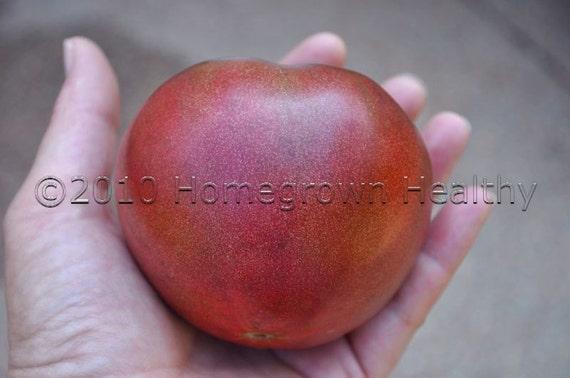 Organic Cherokee Purple Tomato Seeds