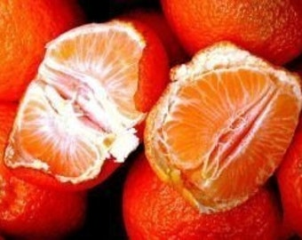 4 oz Nothin But Butta Organic Tangerine, Mango, Cocoa and African Shea Butter