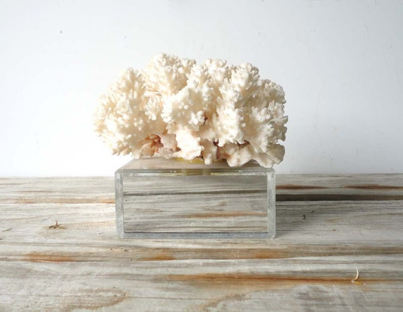 Natural Coral on Mirrored Base