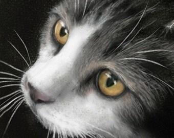 Custom Pet Portrait, Commissioned Cat Painting, (Maine Coon Sample)