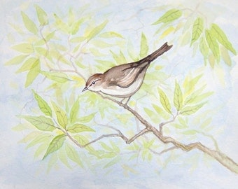 Bird Watercolor Painting