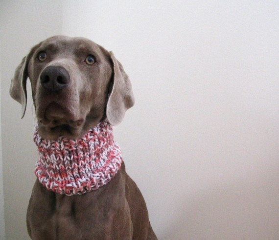 MOD DOG Hand Knit Dog Cowl in Parfait with hand dyed yarn
