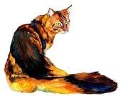 CAT fine art pet portrait print watercolor painting Maine Coon Brown with Dark Stripes