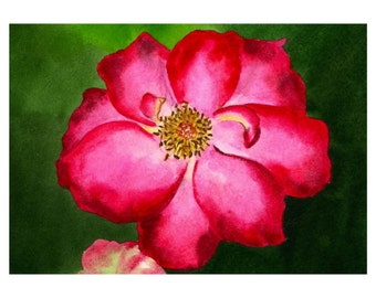 Original Watercolor Painting, Flower Painting, Rose, Pink, Red, Fine Art, Realism, Original Painting, Tennessee Rose