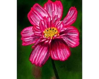 Original Watercolor Painting, Cosmos, Flower Painting, Original Painting, Flower, Fine Art, Nature, Realistic