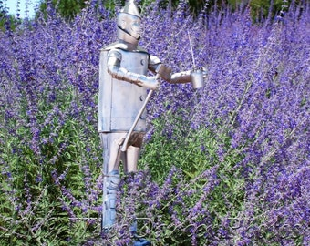 Tinman in Lavender Field - Fine Art Photograph - Kitsch - Whimsy - Tinman - Home Decor - Wizard of Oz -  Americana - Wall Art - Lavender